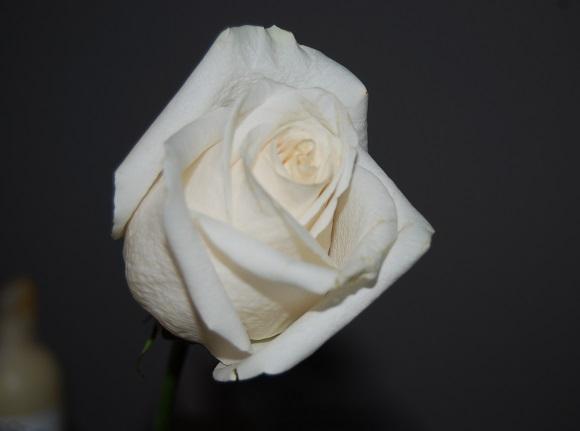 adviento-flor