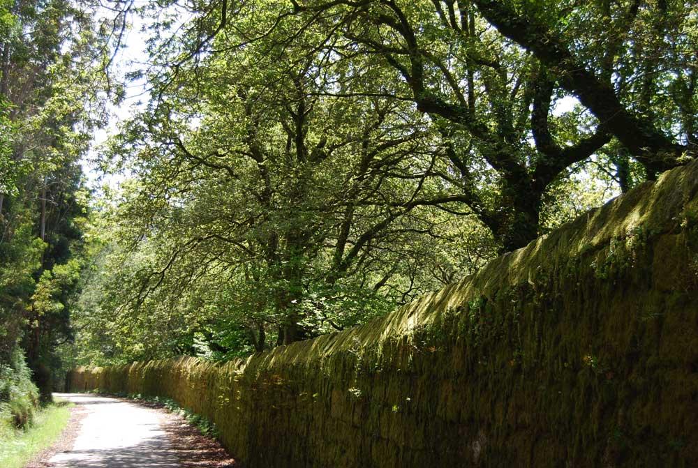 Peregrinos Camino de Santiago